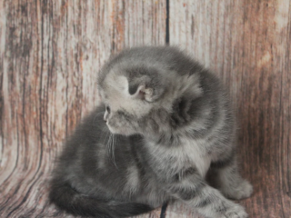 E... Kitty Grad*RU