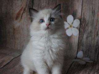 Casper Kitty Grad*RU
