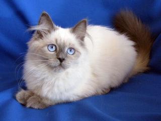 Cat-a-tet Kleo