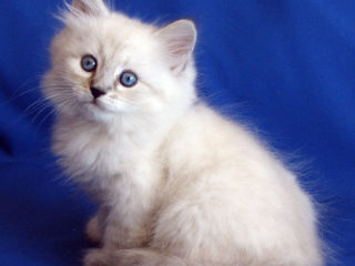 Cat-a-tet Leonard