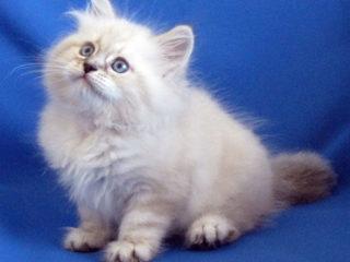 Cat-a-tet Liana